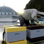 Biodling Göteborgs moské