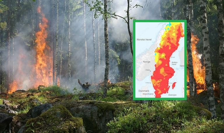 Skogsbrand i Sverige