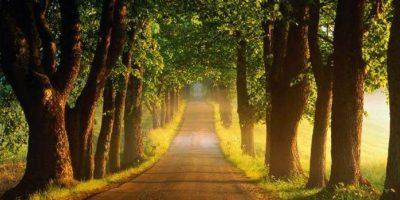Medelväg i islam